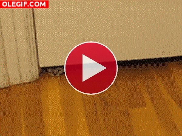 GIF: Gatito colándose bajo la puerta