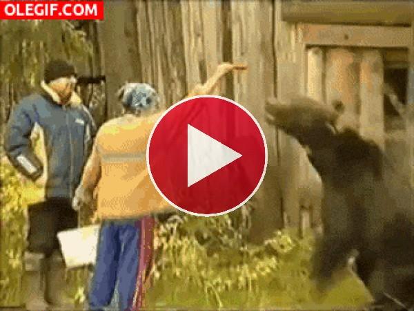 GIF: Este oso ha sacado su instinto