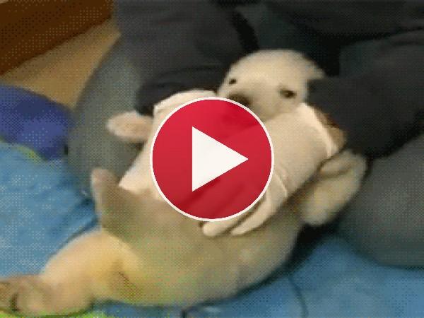 GIF: Este bebé de oso polar tiene cosquillas
