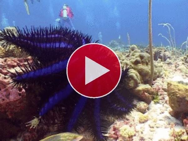 Mira cómo se mueve esta estrella de mar