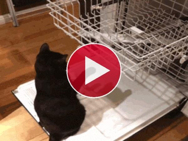 GIF: Este gato se entretiene con cualquier cosa