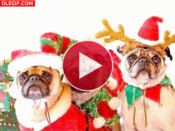 GIF: Perros en Navidad