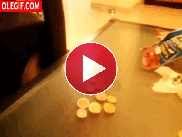 GIF: ¿Para qué querrá las monedas?