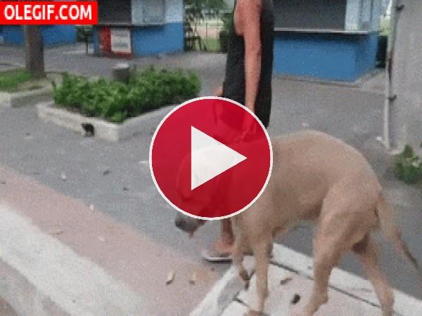 GIF: ¡Como toques a mi hijo, te araño!