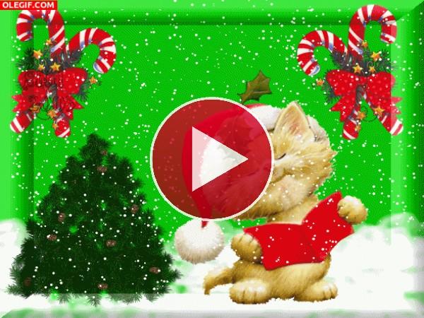 Gato cantando un villancico por Navidad