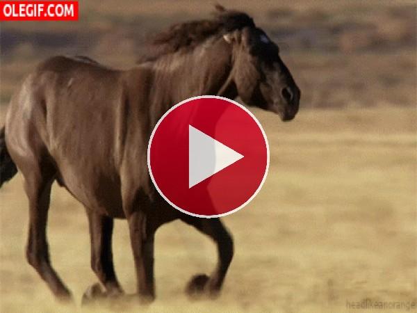 GIF: Mira al caballo galopando