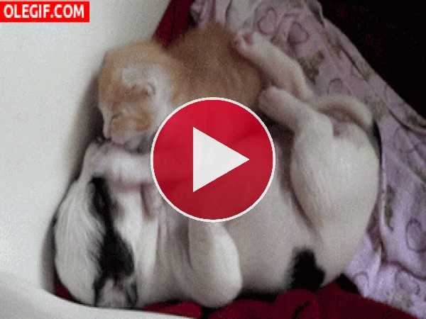 Mira a este gatito dando besitos al cachorro