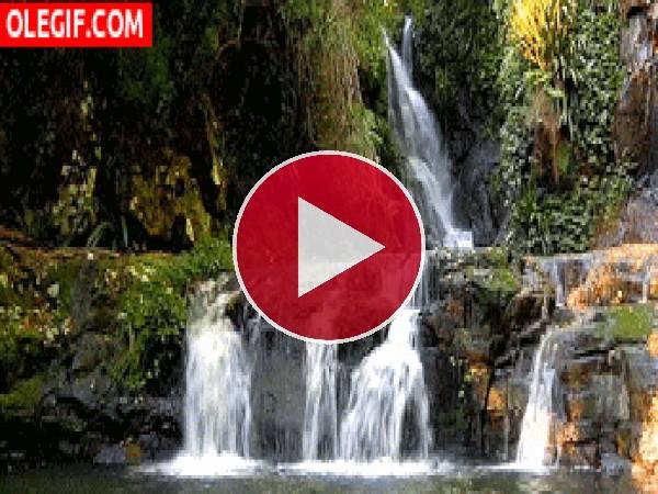 GIF: Varias cascadas en un jardín