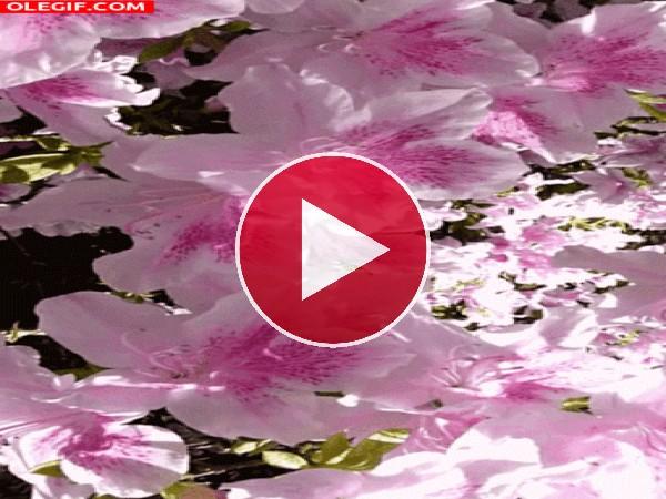 Flores meciéndose con el viento