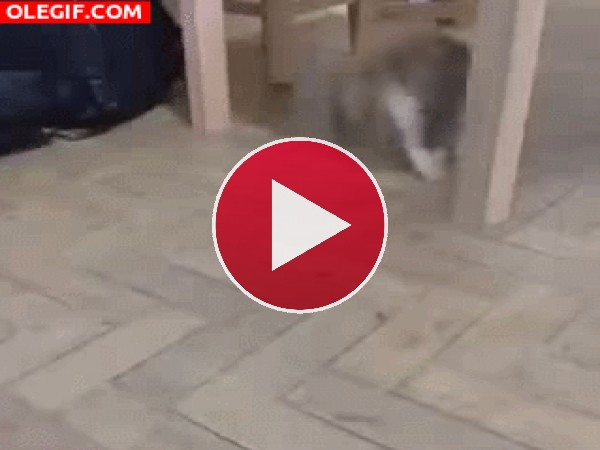 Este gato tiene miedo a un insecto