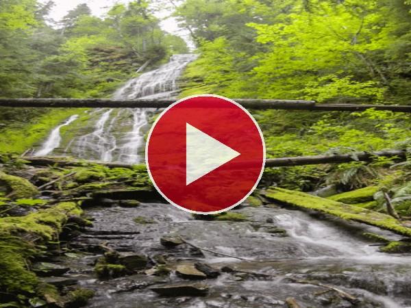 Agua corriendo por un bosque
