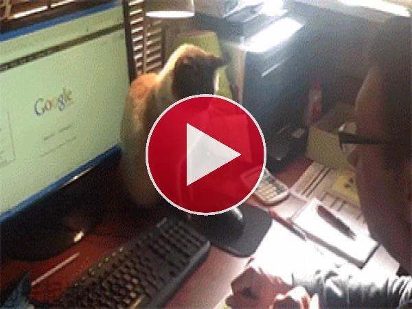 GIF: ¡No toques el ratón!