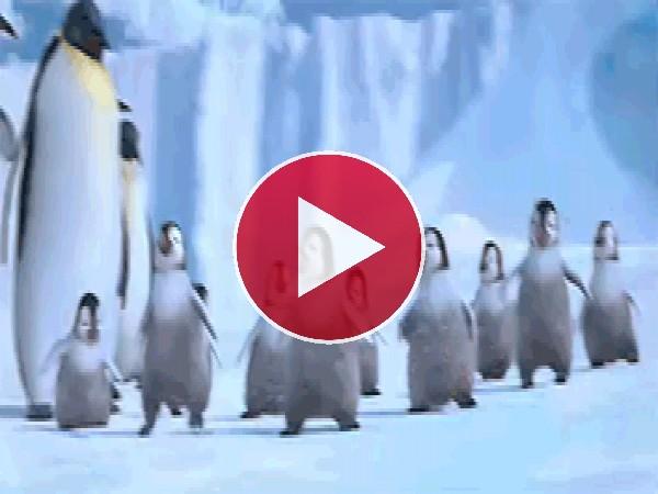 GIF: El baile de los pequeños pingüinos