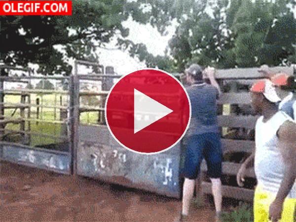 Un peligroso rodeo