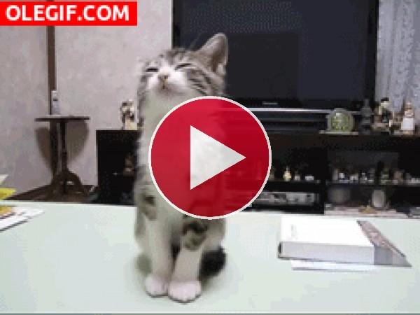 GIF: Este gatito se cae de sueño