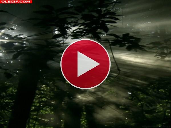 GIF: El interior de un bosque