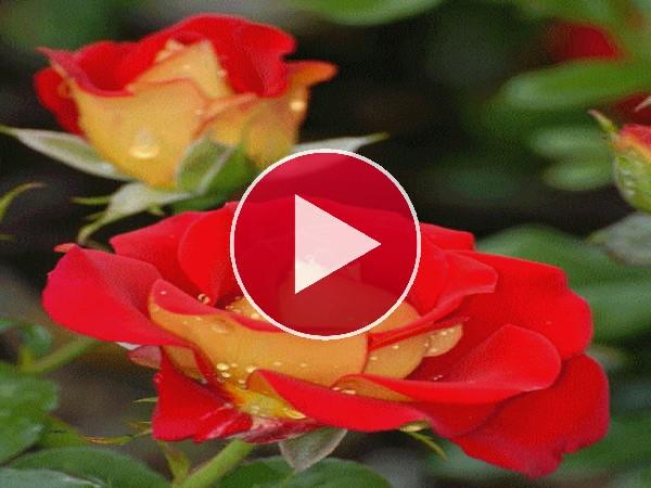 GIF: Flores en la naturaleza