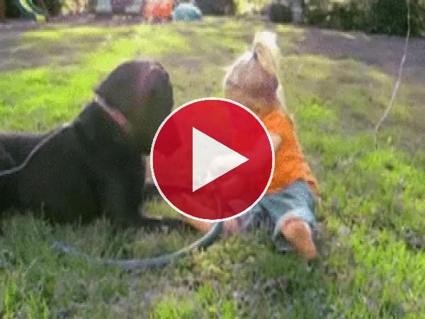 GIF: Me lo paso pipa mojando al perro