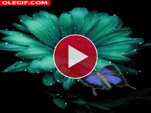Mariposa junto a una flor de colores