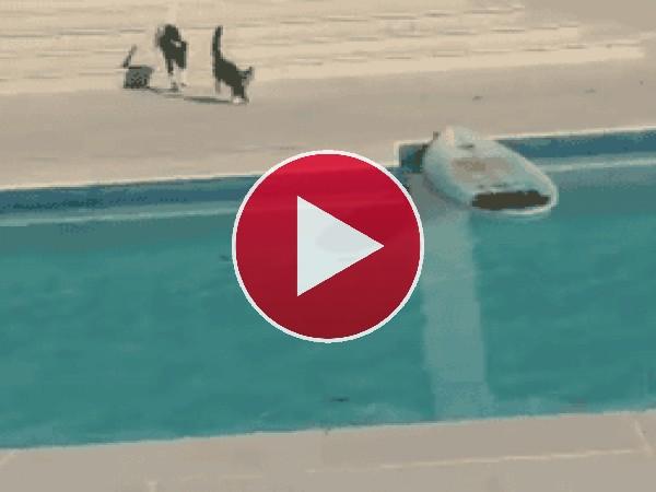 GIF: Mira a este gato surfeando