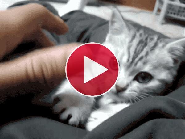 GIF: A este gatito le entra sueño mientras juega