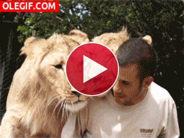 GIF: Unos felinos muy mimosos