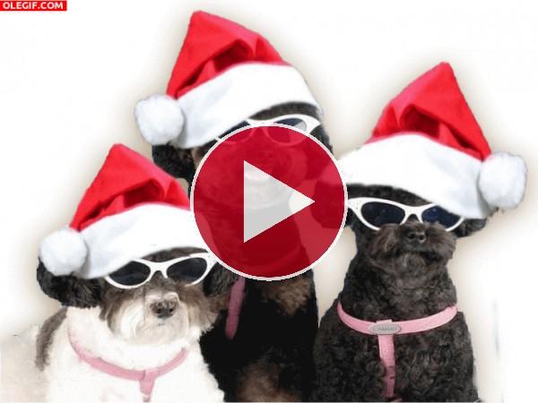 Estos perros te desean ¡Feliz Navidad!