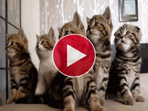 GIF: ¿Qué buscan estos gatitos?