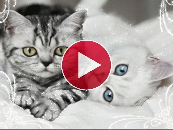 Lindos gatitos moviendo el hocico