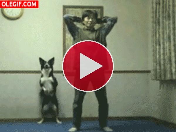 GIF: Mira a este perro haciendo sentadillas