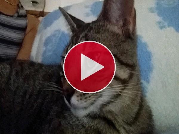 GIF: Un lindo gato