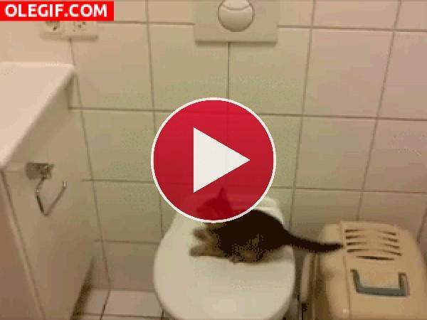 GIF: ¡Pobre gatito!