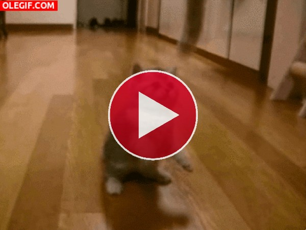 Este gatito se divierte con el juguete