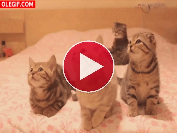 GIF: Qué bien bailan estos gatitos