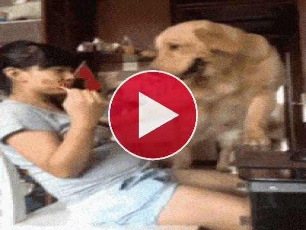 GIF: Es un perro picarón