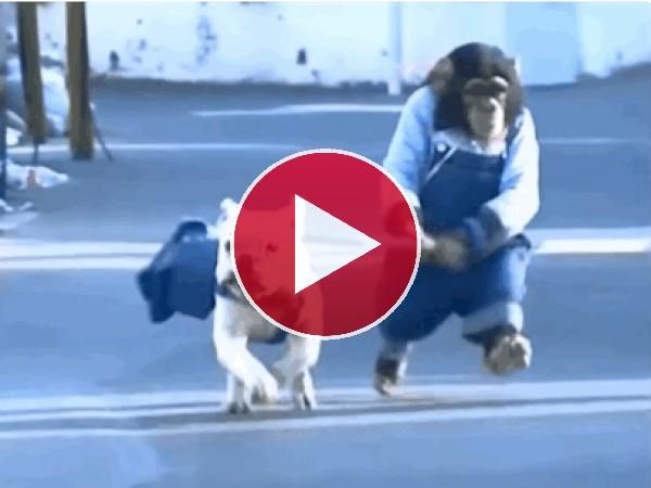 GIF: Mira a este chimpancé haciendo running con su perro