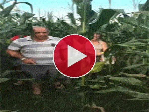 Este maíz es mágico