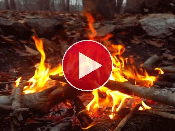 Una hoguera en el bosque