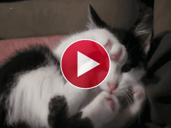 Este gato no controla sus patas