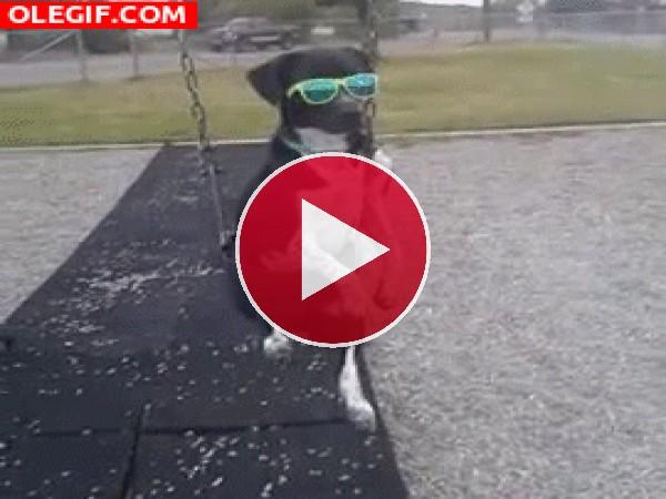 GIF: Este perro se lo pasa bien en el parque