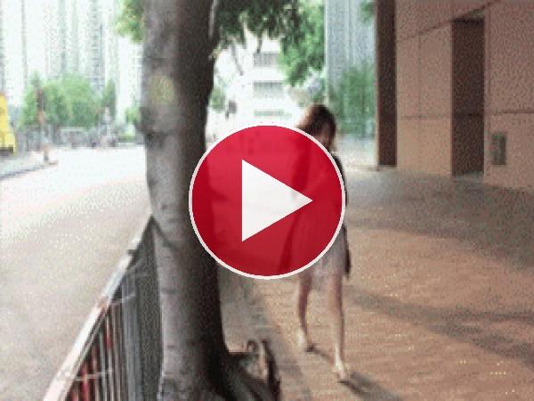 GIF: Maldito árbol...