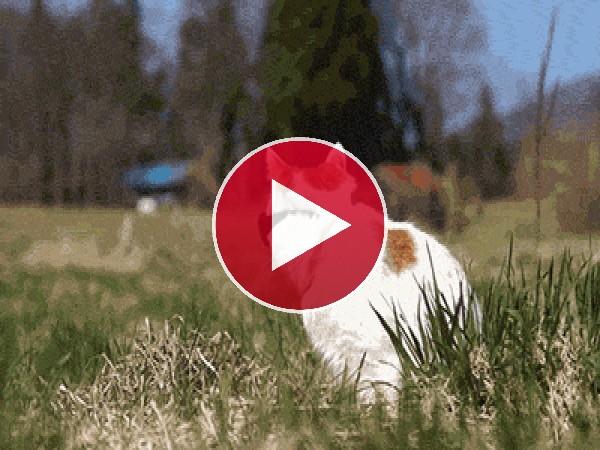 A este gato le molesta el sol