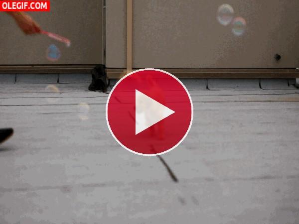 GIF: Este perro se divierte con las pompas de jabón