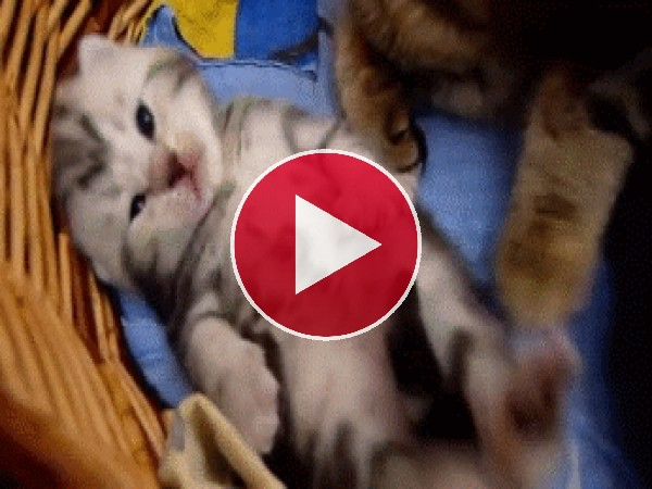 GIF: Un hermoso gatitio