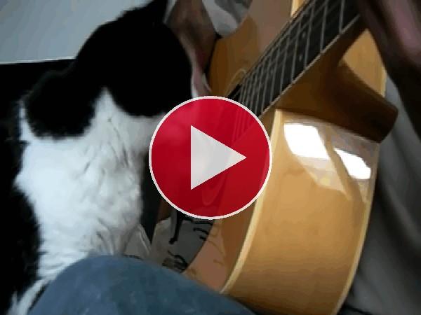 A este gato le gusta el sonido de la guitarra