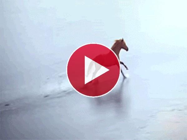 Paloma volando junto a un caballo