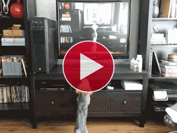 GIF: A este perro le gusta verse en la tele