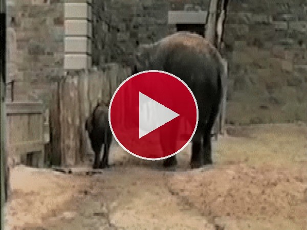 GIF: A este elefante le dan miedo las ardillas