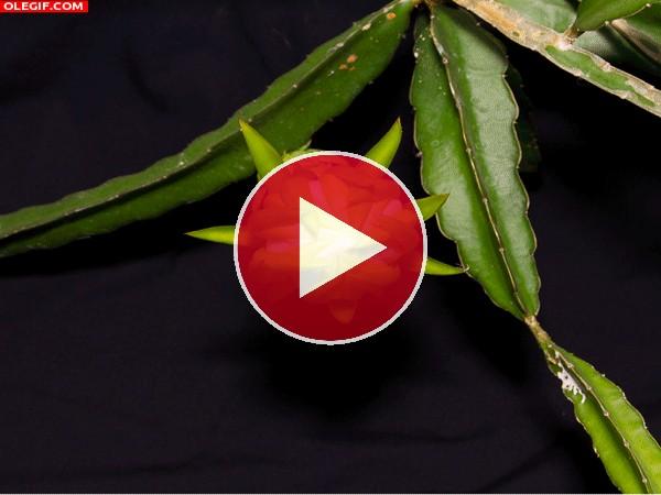 GIF: Mira a esta hermosa flor abriendo los pétalos