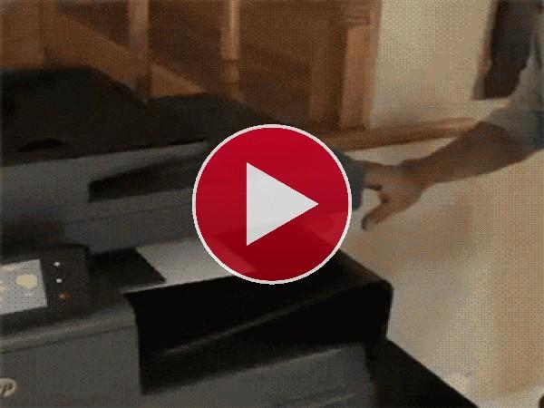 GIF: La impresora de gatos